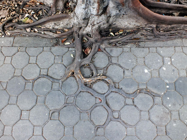 Adaptive roots in concrete jungle, c.e.