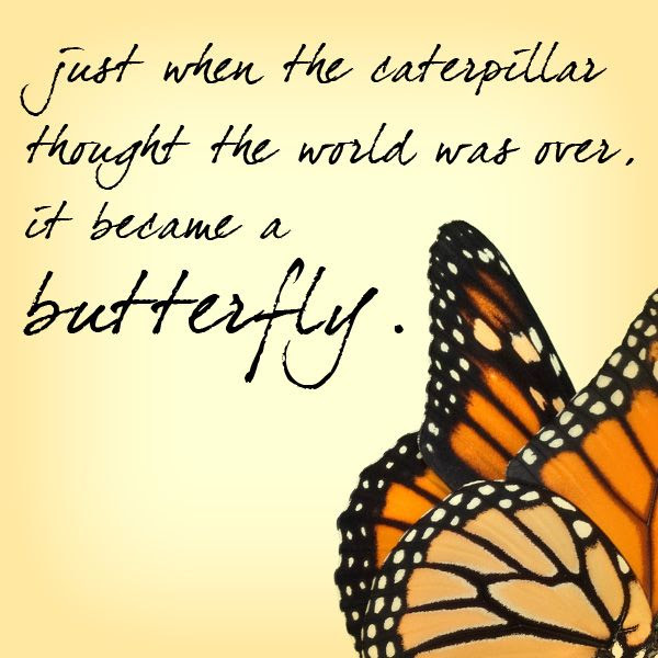 Butterfly Quotes Just When The Caterpillar It Become A Butterfly