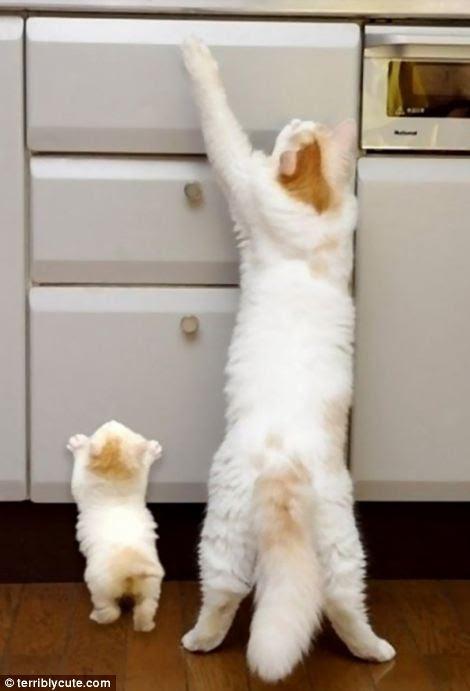Reach cat