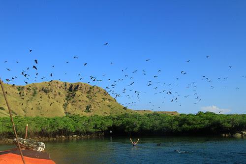 Pulau Komodo gak hanya Komodo !