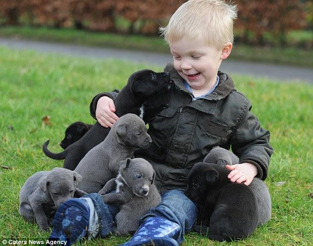 Brincadeira de criança: Os filhotes desfrutar de um pouco de atenção muito necessária de um jovem fã que se recuperam de sua provação