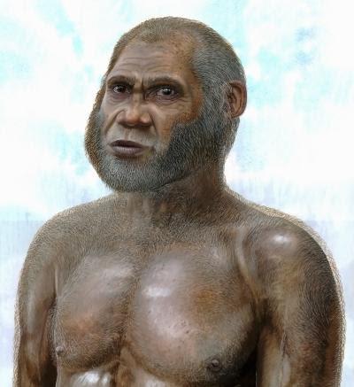 Una ricostruzione artistica di un fossile di una specie finora sconosciuta dell'età della pietra, che presenta un singolare incrocio di tratti arcaici e modern. Crediti: Art copyright by Peter Schouten