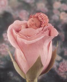 bebe filette dans une rose