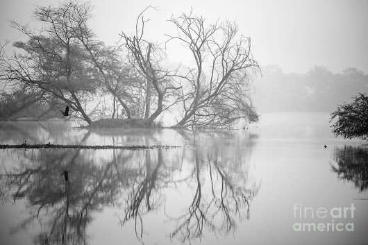 Tree In A Lake by Pravine Chester