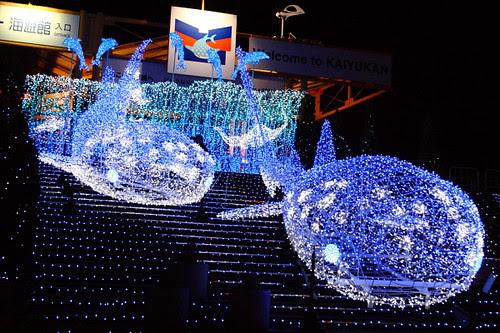 Amazing lights outside Osaka Aquarium
