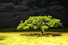 Figueira numa noite fria noite de lua cheia  / A fig tree in a cold full moon night