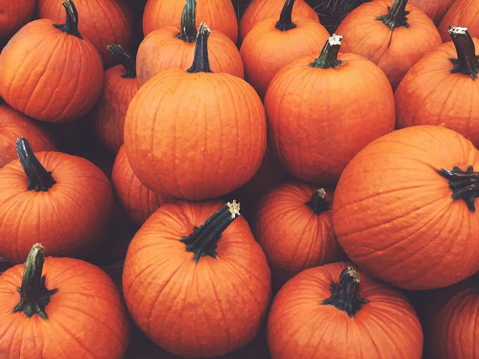 TREND ESSENCE: What is a 'Thankful Pumpkin'? And how can you make one with your family?