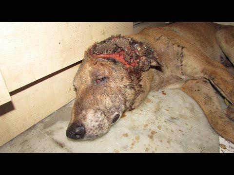 Mira la increible recuperación de un perro a poco de morir