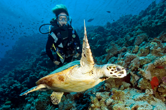 5 Family Diving Destinations So Spectacular, Even Non-Divers Will Love Them