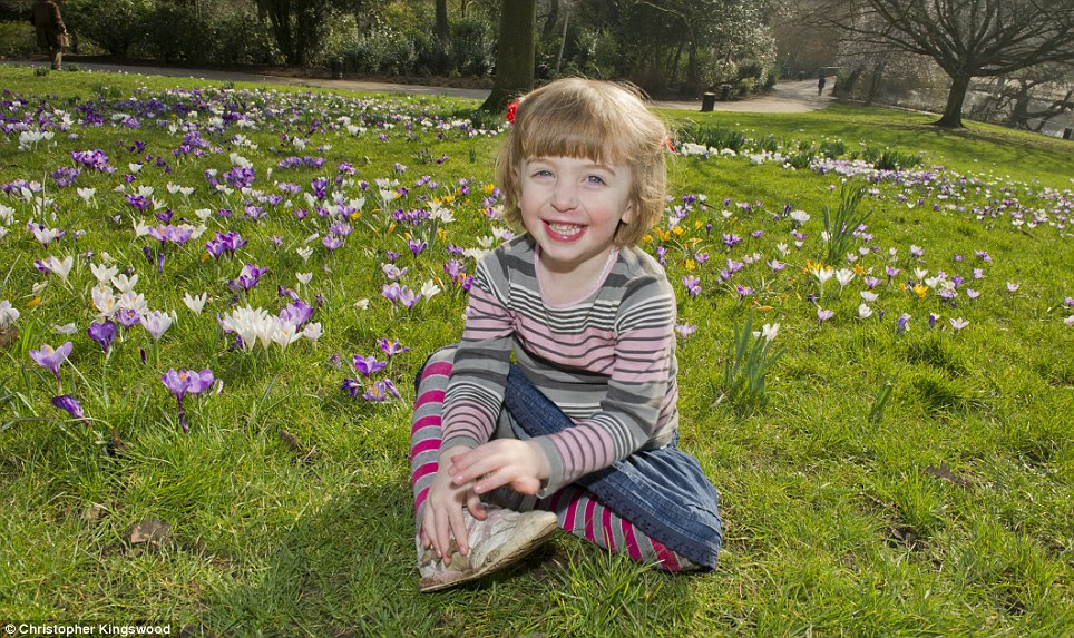 Joys of spring: Three-year-old Beatrice Ryan plays among the blooming crocuses in Waterlow Park in North London