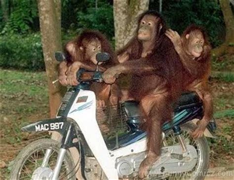 foto lucu binatang ahmad nawawi