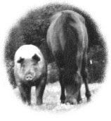 pig_horse