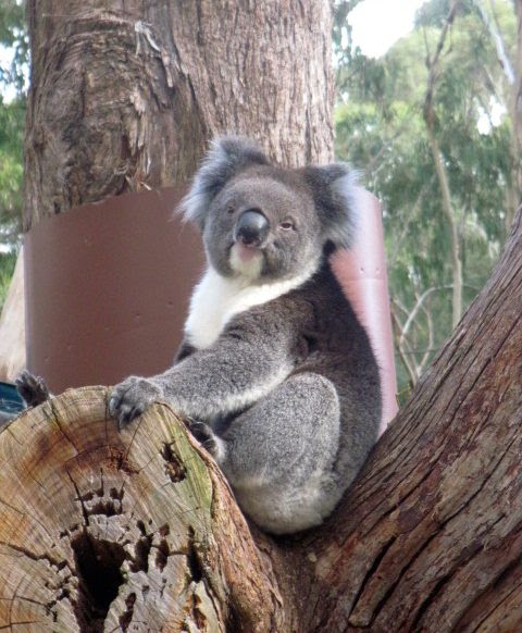 Cleland Wildlife Park and Mt Lofty Summit | O' The Places We can Go!
