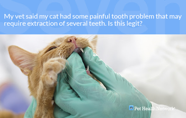 Funny Dog Dentist Captions Cool Attitude Captions