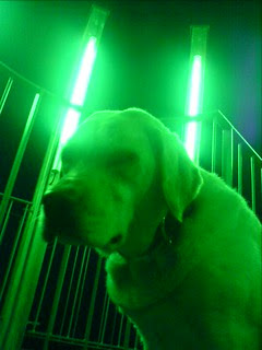Green light & Dog in the night