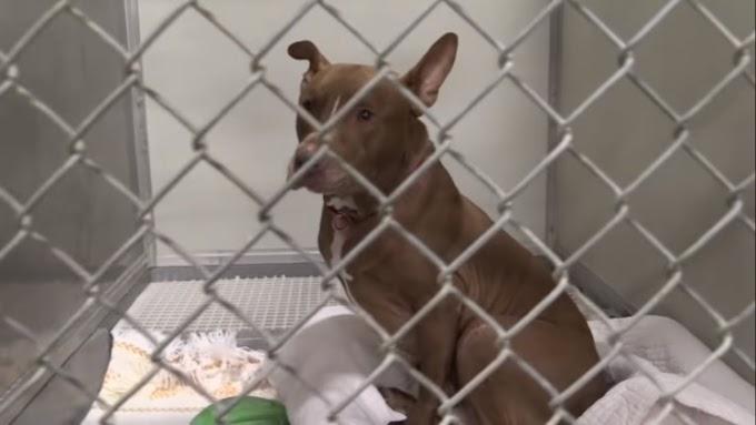 Gerónimo, el perro que esperó pacientemente 1145 días por un nuevo hogar, ha sido devuelto