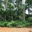 Escalating cost of forest conservation