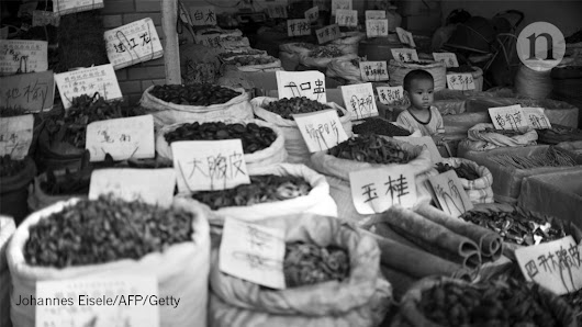 Traditional Chinese medicine needs proper scrutiny