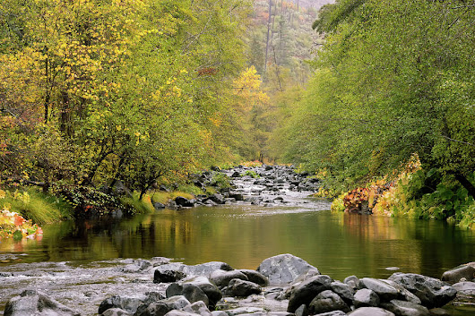 Fall Along The Stream by Steven Clark