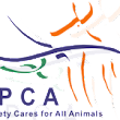 SPCA Ireland - Irish SPCA - Animal Charity - Rescue Dogs, Cats, Pets, Horses - Prevent Animal Cruelty - ISPCA.ie