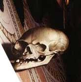 File:Skull-Ambassadors.jpg