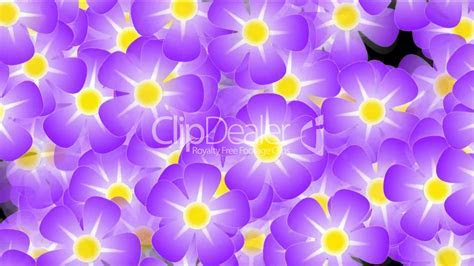 purple wild flower background,violet,flicker,Festivals