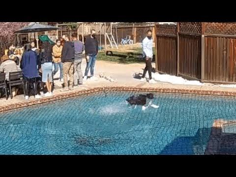 Perro corre sobre la red en la parte superior de la piscina y sorprende a la gente