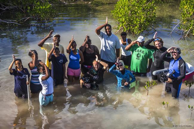 mangroveteamlower