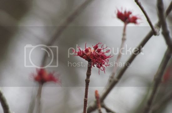 photo ef7db9e4-6142-4c93-baf1-3b3ec976b5fe_zpse00a1b32.jpg