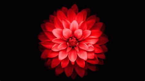 iphone wallpaper flowers hd
