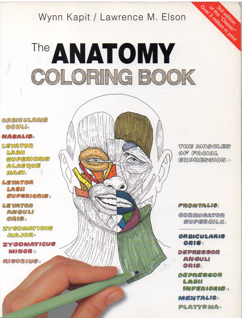 Best Of Anatomy Coloring Book Chapter 10 Blood Answers ...