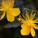504 -Yellow flower in garden.