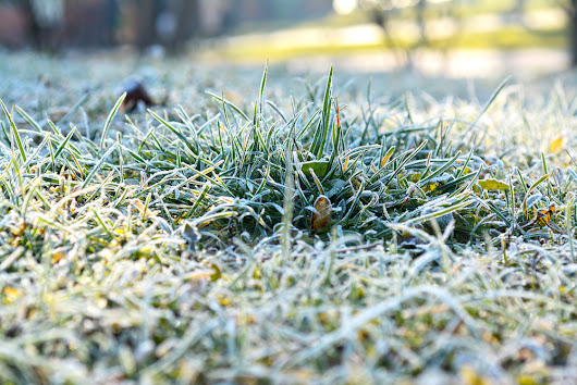 8 Tips For Winter Lawn Care | Winter Lawn Care Services