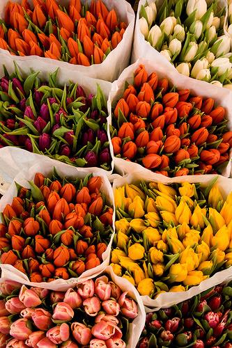 tulipstall
