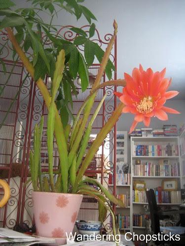 5.11 Pink Night-Blooming Cereus 6