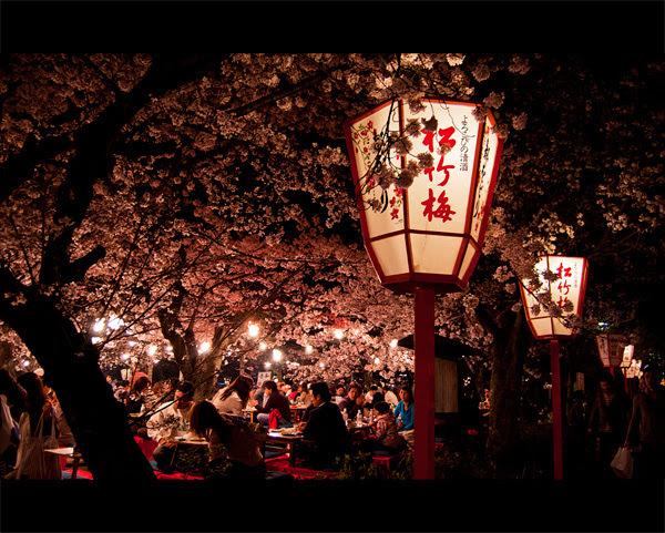Yozakura em Kyoto
