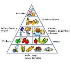 La Nutricion La Nutrición En Los Reinos