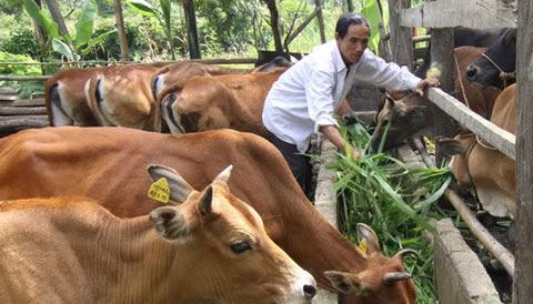 Chăn nuôi bò không còn được nông dân mặn mà