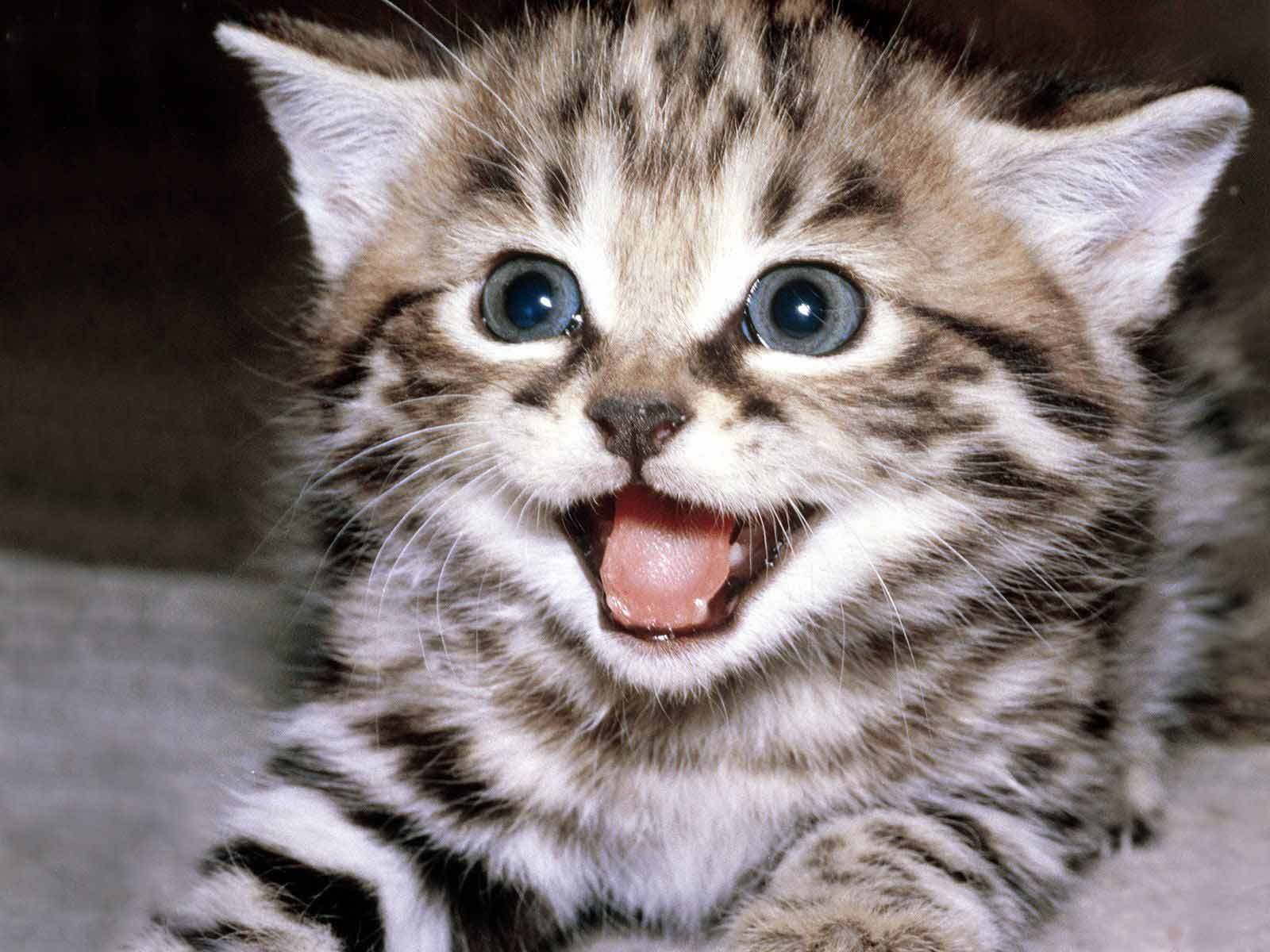 http://tailsmagazines.files.wordpress.com/2009/04/kitten.jpg