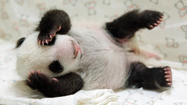 10 best panda photos, just because they're cute