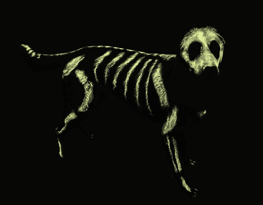 """""""picture of a glowing dog skeleton made by glow-in-the-dark paint, painted on a dog. The picture is taken in the dark so all that can be seen is the glowing painted skeleton."""