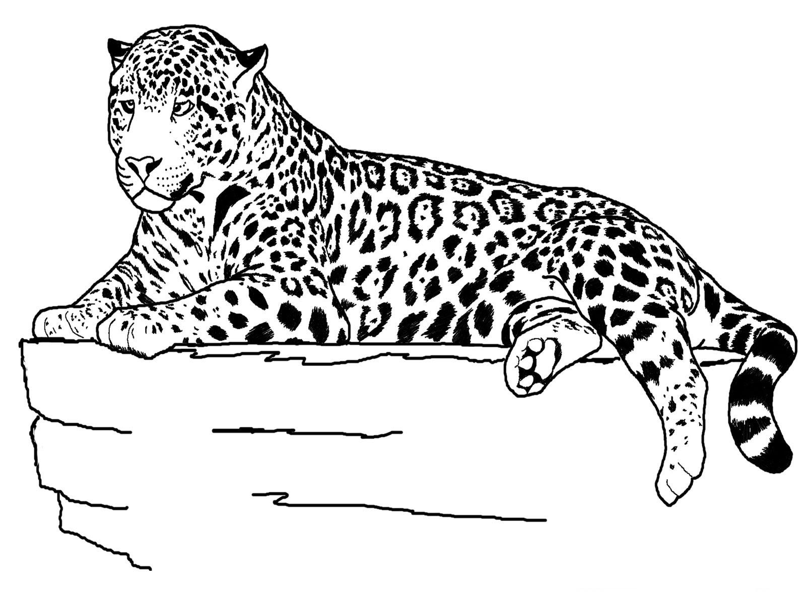 baby leopard ausmalbilder  kinder ausmalbilder