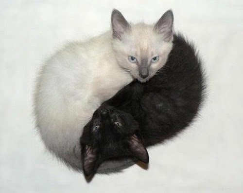 PERFECT HARMONY The two cats nestled together, white around black, depict the harmony of Yin and Yang. Nature has a way of balancing its creations to achieve the ultimate harmony. We can learn from nature to surround ourselves with beauty and balance, instead of constant noise, and confusion. Life doesn't have to be filled with pain and unhappiness. We have to search for the right balance in our lives that will bring us greater peace and feelings of accomplishment.