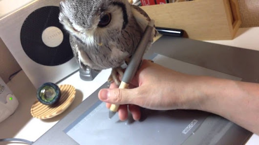 White Faced Owl Perches Steadily On Human's Hand While They Sketch on a Tablet