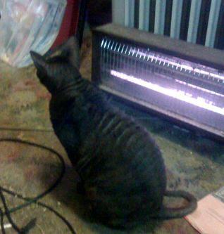 Jezebelle in winter