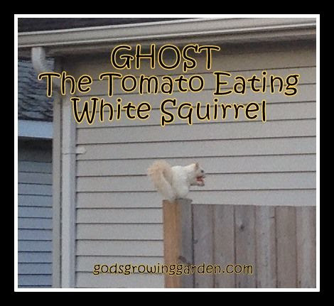by Angie Ouellette-Tower for http://www.godsgrowinggarden.com/ photo GhostSquirrel1 - Copy_zpsnaslgzi4.jpg