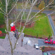 Woodinville WA Tree Removal, Pruning, Care, and Grinding