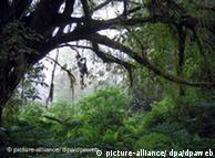 En las  selvas de Camerún se buscan activos contra enfermedades.