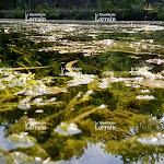 Lorraine. Chaleur et cyanobactéries dans nos rivières et plans d'eau