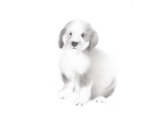 Dog Drawing Sheepdog Puppy Sketch Pencil Animal by studioQgallery